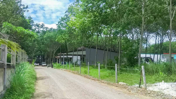 1 Rai Land Plot in Thalang